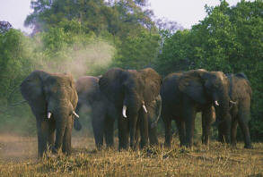 Elephants at the Kafue National Park