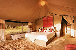 Luxurious Sayari Camp right by the famous Mara River